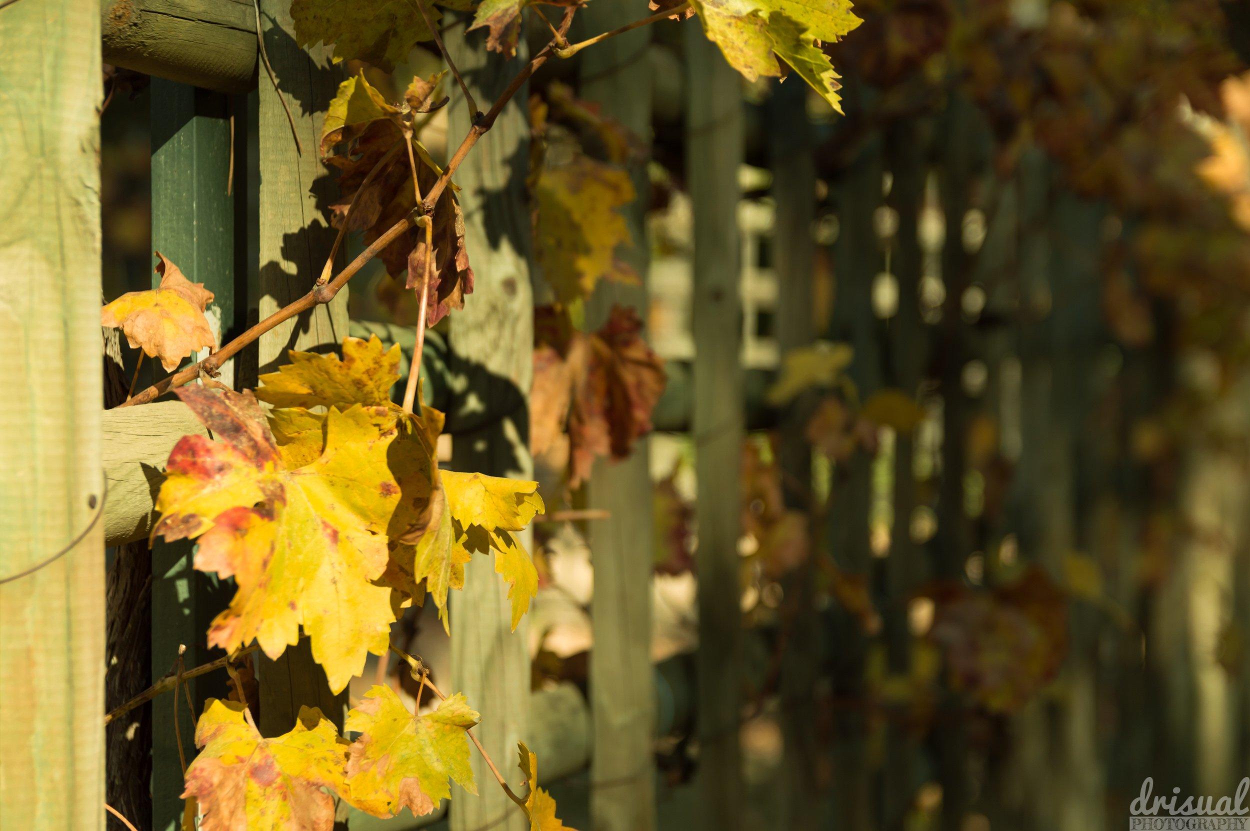 Hojas de otoño en una pared de madera