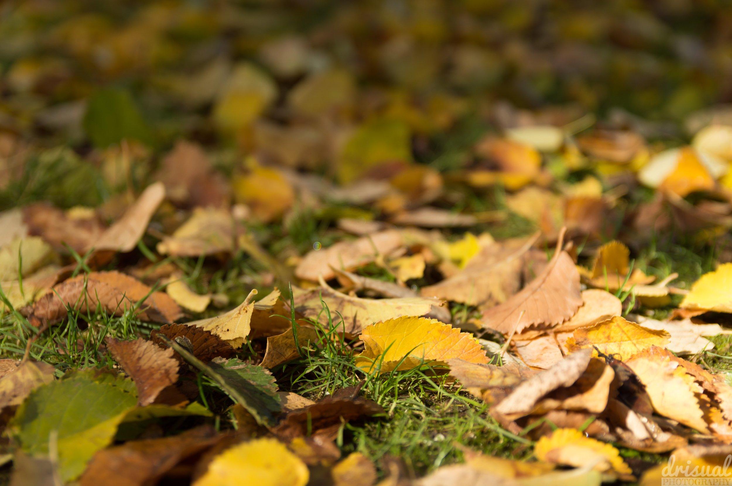 Hojas de otoño sobre el suelo