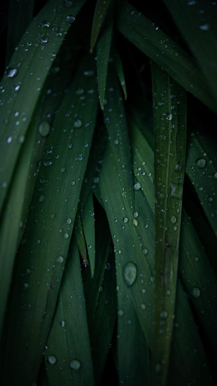 smartphone wallpaper - gotas de lluvia