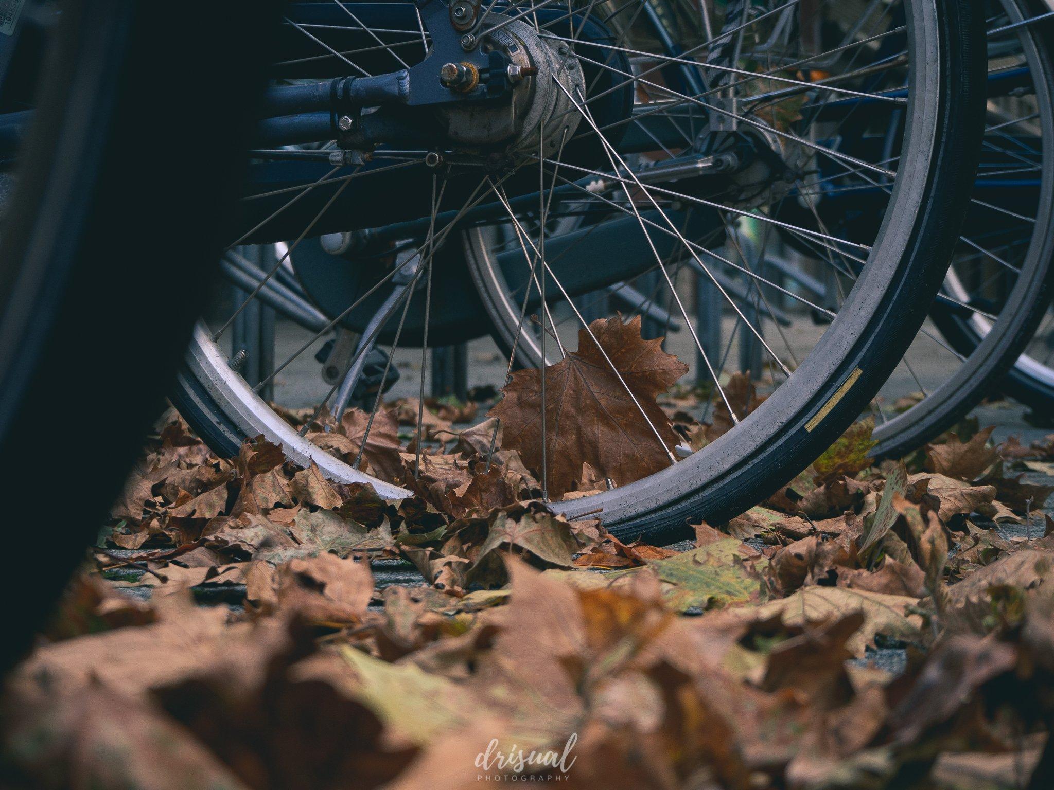 hojas otoño hengelo bicicleta