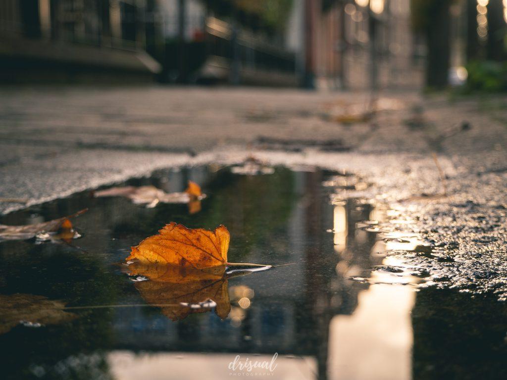 detalle de otoño en Almelo, Países Bajos